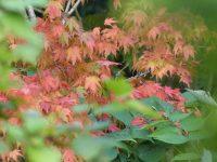 autumn-2017-085